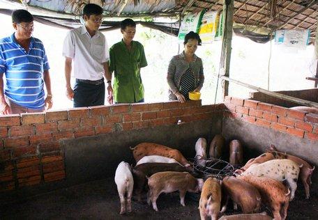 Vĩnh Long: Heo tộc là giống heo gì mà nông dân ở đây nuôi sau 2 tháng cứ bán 1 con lời 500.000 đồng? - Ảnh 1.