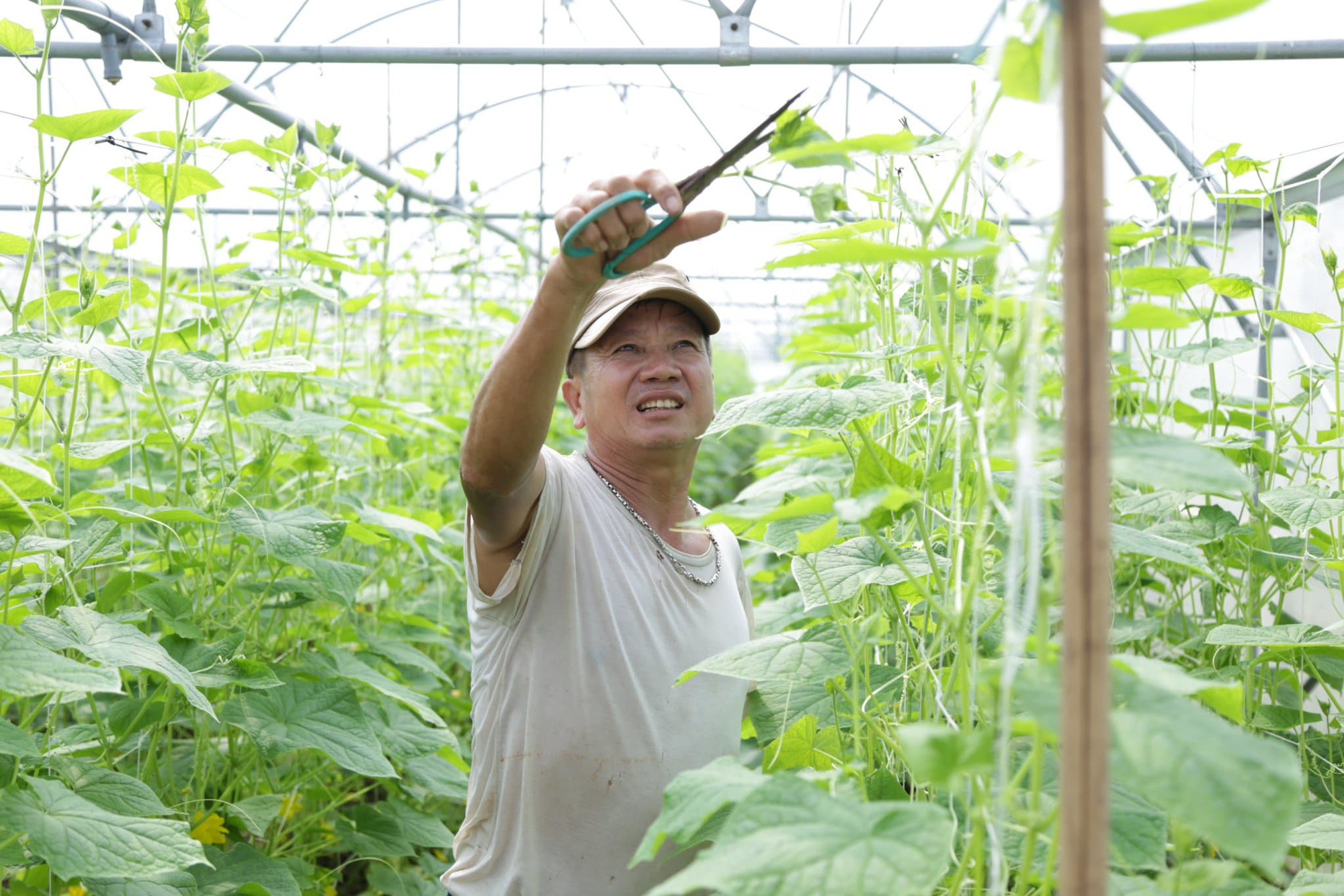 """Chuyên gia hiến kế giúp xuất khẩu nông sản """"cán đích"""" mục tiêu 42 tỷ USD - Ảnh 1."""