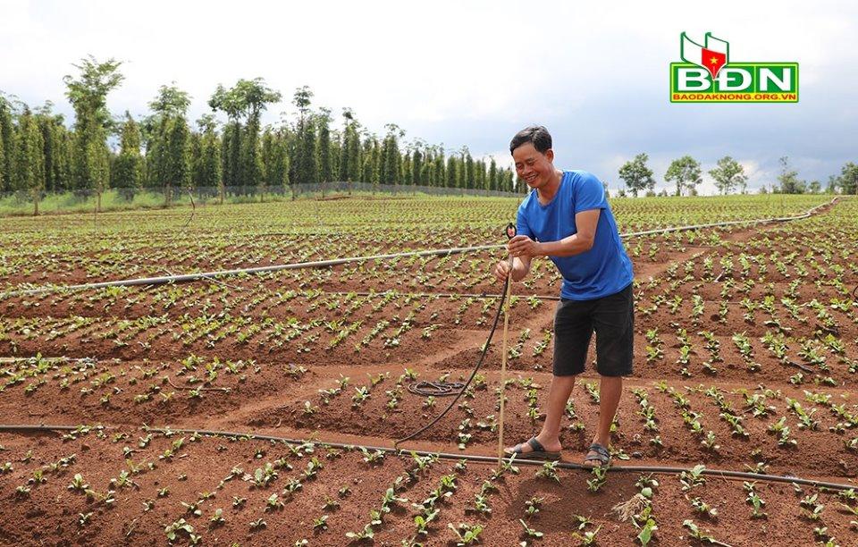 Trồng cà tím Nhật Bản, nông dân Đắk Nông bán cho ai mà hái cả trăm tấn trái vẫn không lo dội chợ? - Ảnh 4.