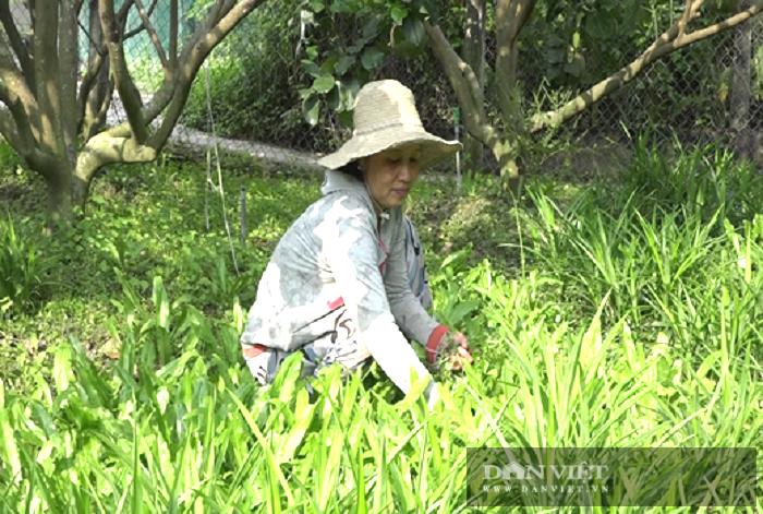 """Tiền Giang: Nuôi trồng kiểu """"thả vịt đi lùa"""", anh nông dân có thu nhập khiến nhiều """"Hai lúa"""" mơ ước - Ảnh 3."""