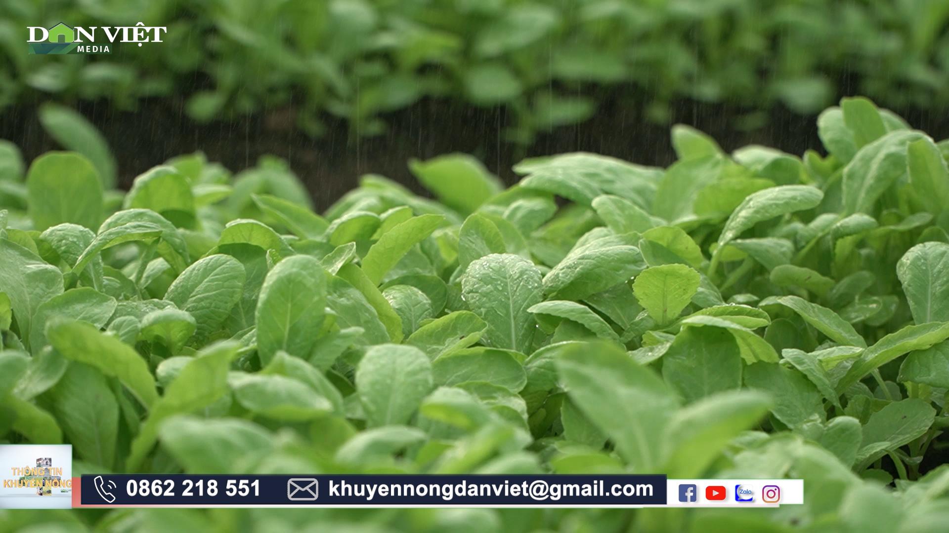 Tránh nắng cho rau siêu giỏi, nông dân Hà Nội trồng rau trái vụ vẫn cho năng suất cao  - Ảnh 3.