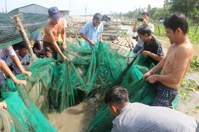 Đồng Tháp: Về Thuận Tân Hội quán xem dỡ chà bắt cá trên sông Tiền, có cá éc to, cá lòng tong tươi roi rói - Ảnh 1.