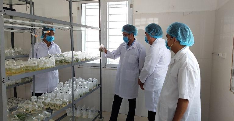 Loài hoa lan rừng quý hiếm nào đang được tỉnh Lai Châu bảo tồn, nhân giống bằng phương pháp gì? - Ảnh 1.