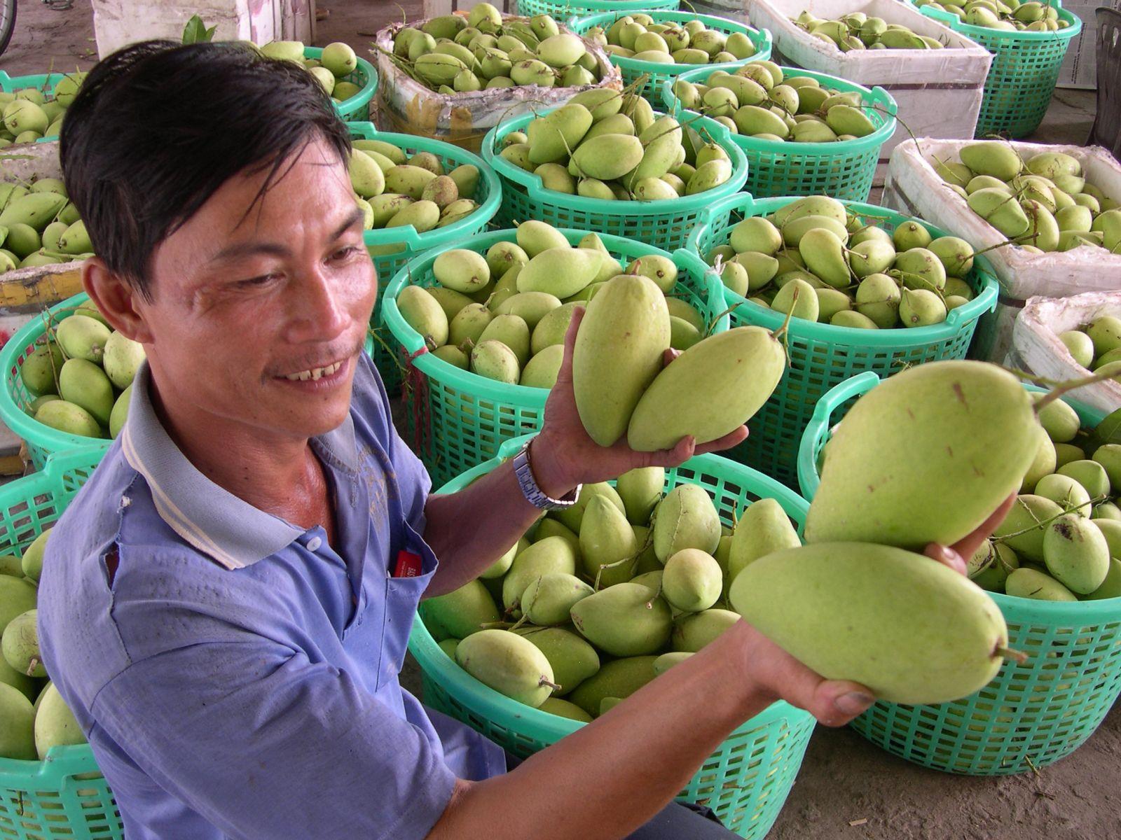 Ba loại trái cây của Việt Nam đang bán lượng khổng lồ sang Trung Quốc sẽ phải cạnh tranh với Campuchia, là những quả nào? - Ảnh 2.