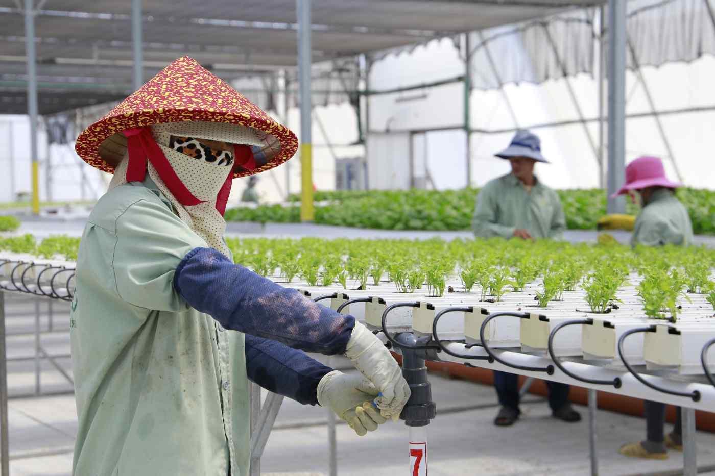 Công nghệ Israel đang góp phần hiện đại hóa ngành nông nghiệp Đông Nam Á như thế nào? - Ảnh 1.