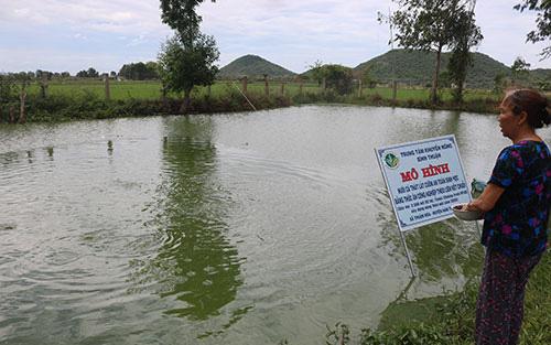 """Bình Thuận: Cá thát lát đặc sản con đã to lắm rồi, nhưng vì sao nông dân đành phải bấm bụng nuôi """"báo cô""""?"""