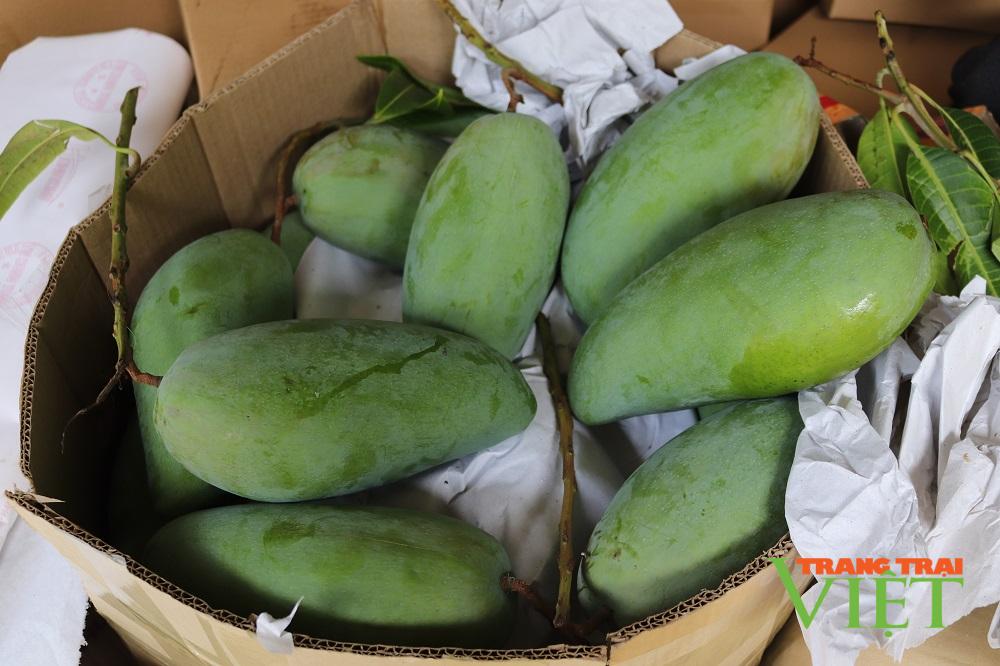 Mường La (Sơn La) xuất khẩu và tiêu thụ gần 7.000 tấn xoài - Ảnh 3.