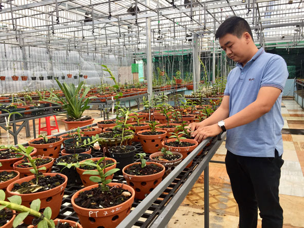Đắk Lắk: Chàng trai trồng hoa lan giả hạc, có hoa lan giả hạc đột biến nhiều người kéo đến xem - Ảnh 1.