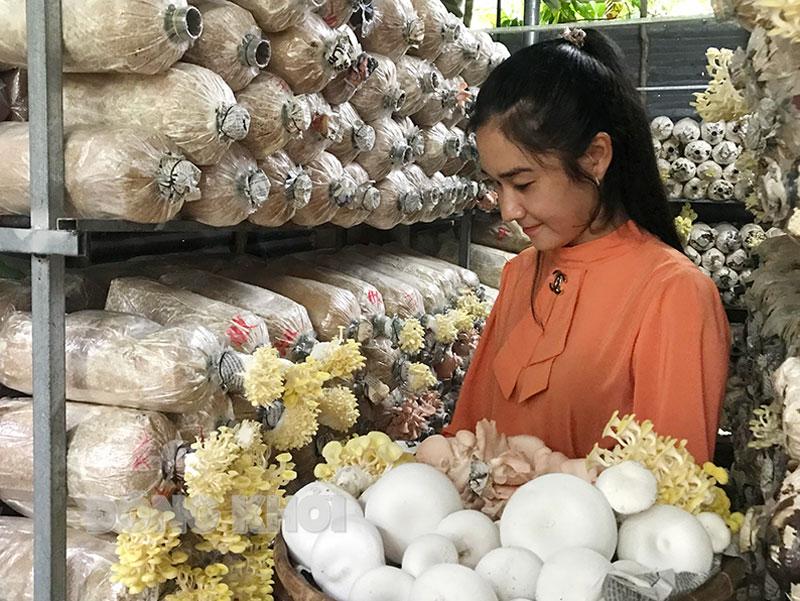Bến Tre: Sở hữu hàng chục nghìn phôi nấm, mỗi tháng bà chủ trại nấm sạch thu hàng chục triệu đồng - Ảnh 1.