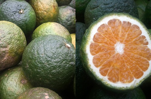 """Dù giá có cao đến đâu thì 7 loại trái cây không hạt này  vẫn """"làm mưa làm gió"""" trên thị trường - Ảnh 14."""