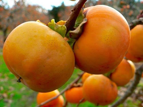 """Dù giá có cao đến đâu thì 7 loại trái cây không hạt này  vẫn """"làm mưa làm gió"""" trên thị trường - Ảnh 16."""