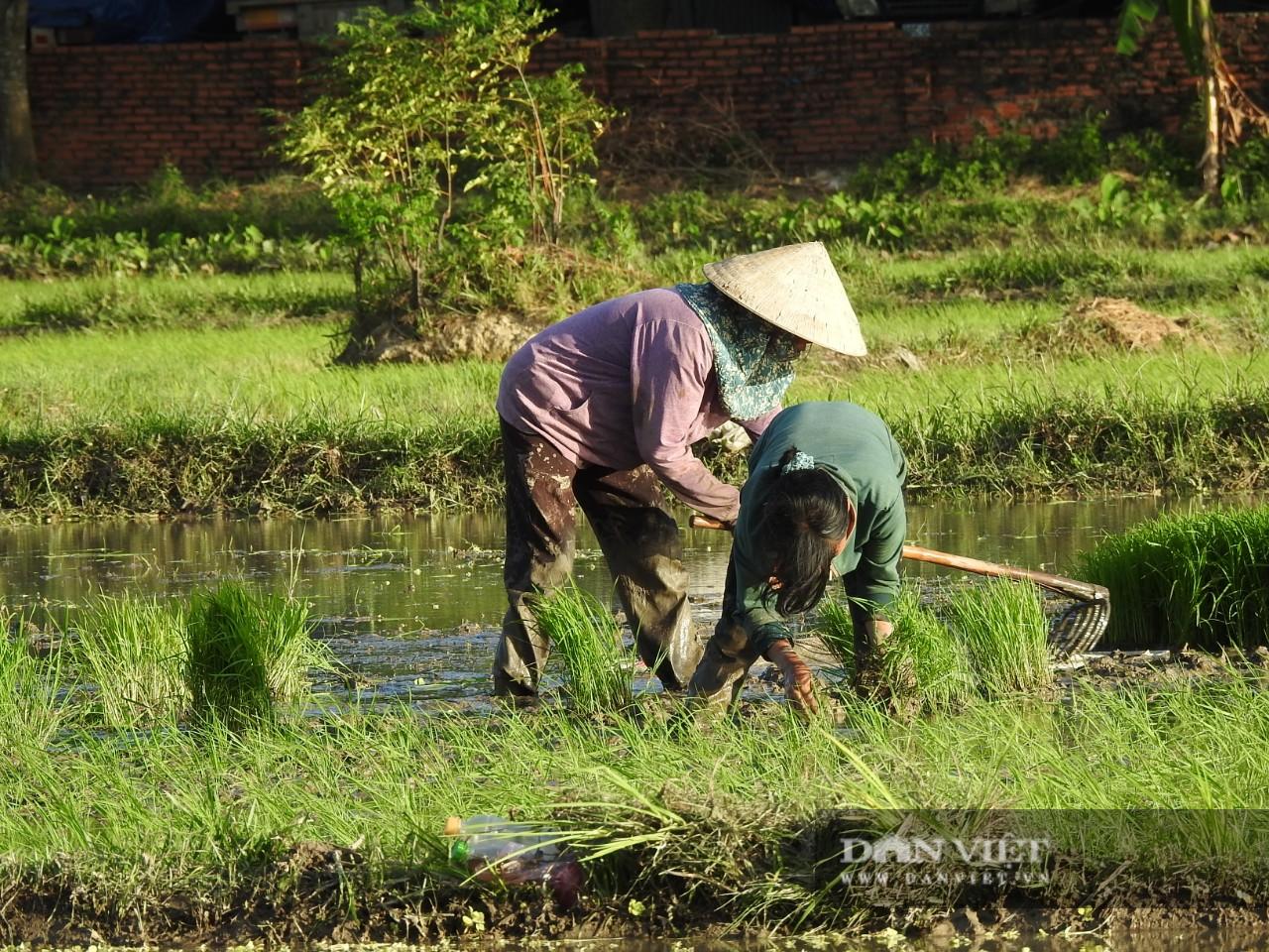Hà tĩnh: Nông dân tích cực phục hồi sản xuất vụ Hè Thu sau bão số 2 - Ảnh 7.