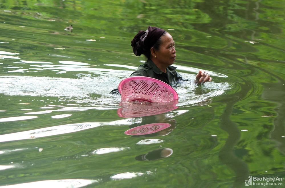 Nghệ An: Lặn ngụp như rái cá giữa cái nóng như thiêu đốt, dân cào loại đặc sản bé như cái cúc áo