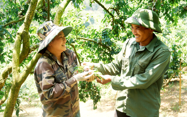 Tỉnh Sơn La xây dựng thành thương hiệu để trái mận hậu làm đại diện cho nông sản của tỉnh. (Ảnh Foodmap)