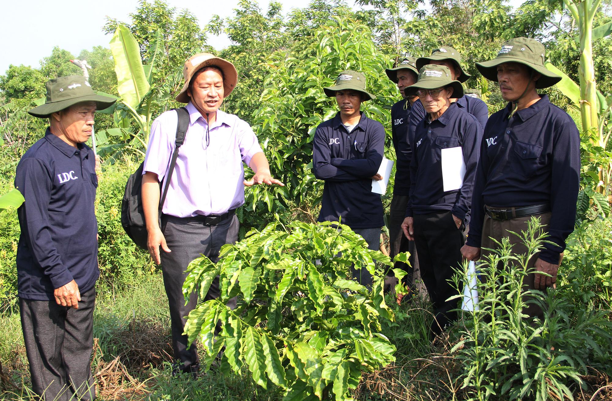 Chương trình cảnh quan bền vững giảm chi phí, tăng thu nhập cho nông dân - Ảnh 1.