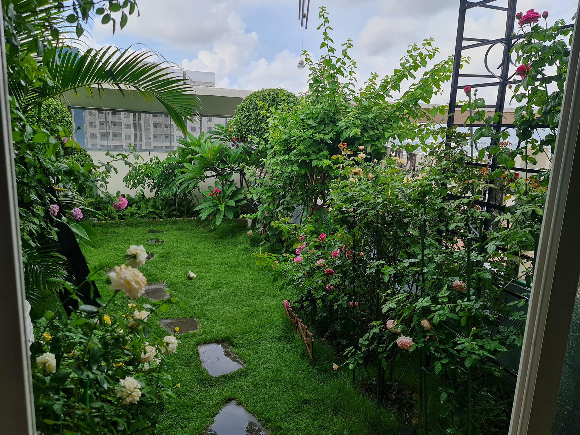 """vườn hoa hồng ngoại """" vạn người mê"""" - Ảnh 2."""