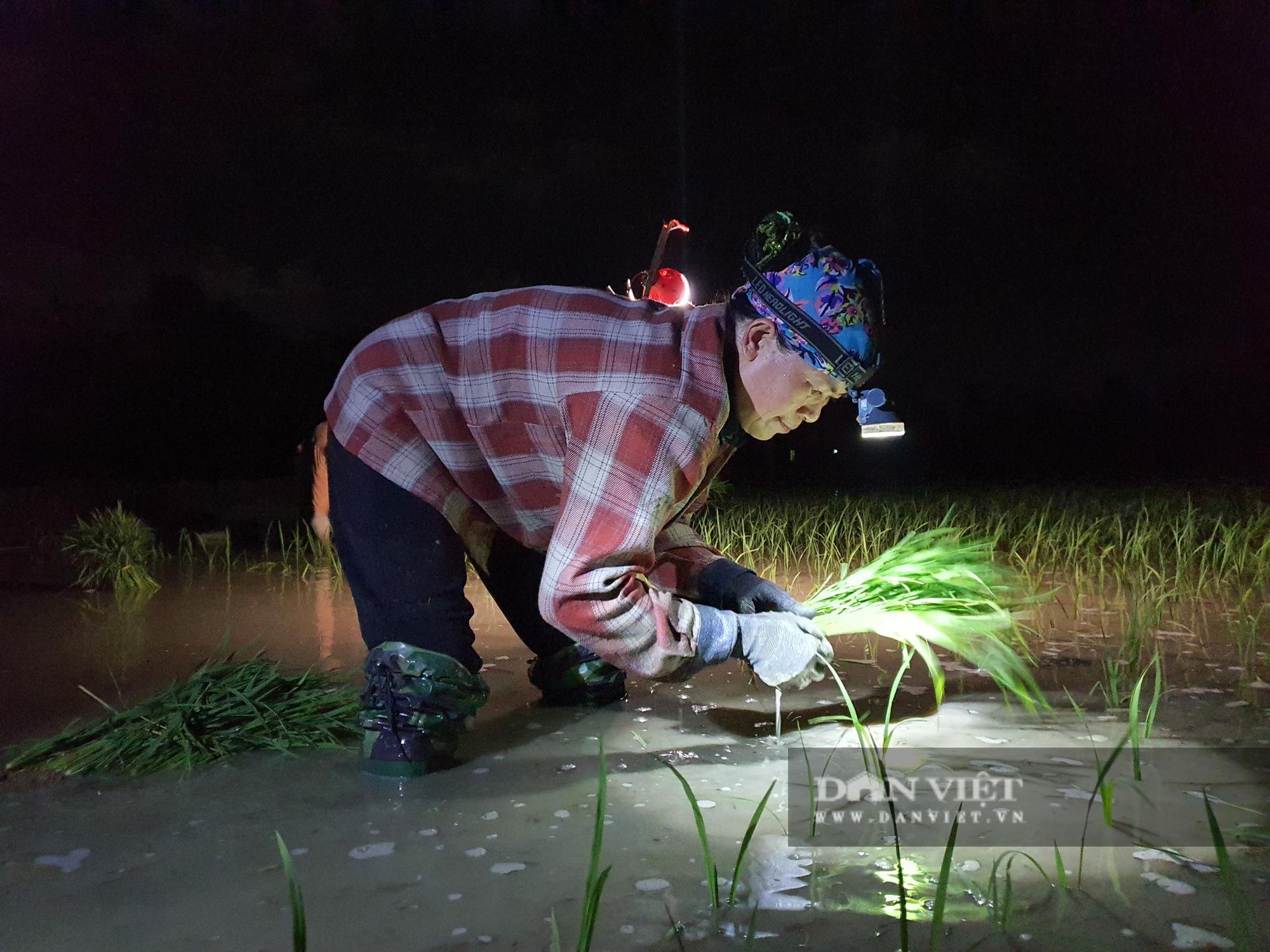 Thanh Hoá: Nắng nóng 40C nông dân Thanh Hóa chong đèn đi cấy lúa đêm  - Ảnh 2.