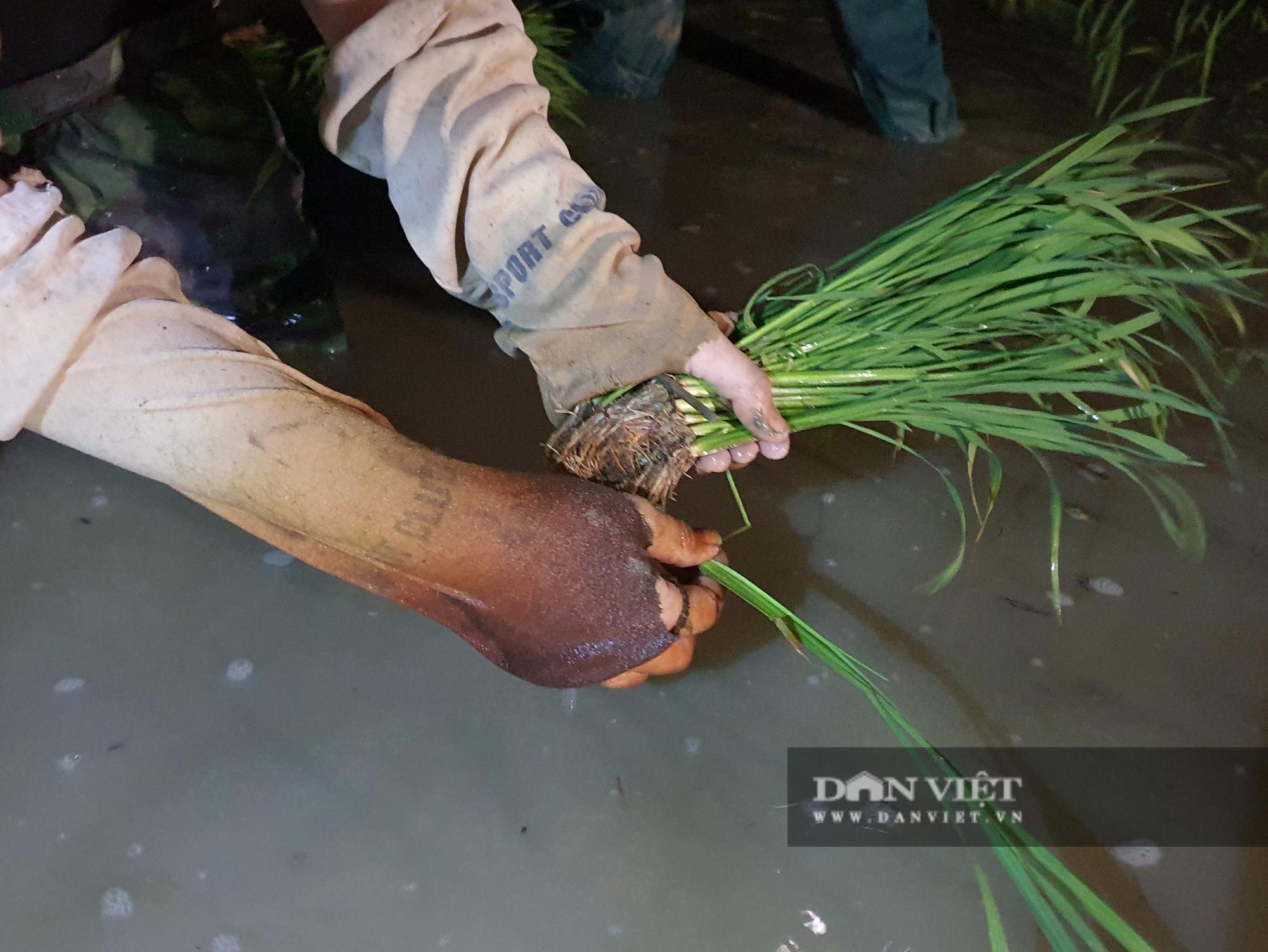 Thanh Hoá: Nắng nóng 40C nông dân Thanh Hóa chong đèn đi cấy lúa đêm  - Ảnh 3.