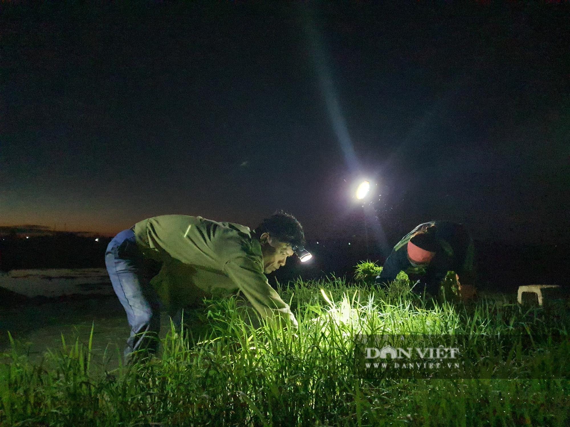 Thanh Hoá: Nắng nóng 40C nông dân Thanh Hóa chong đèn đi cấy lúa đêm  - Ảnh 5.