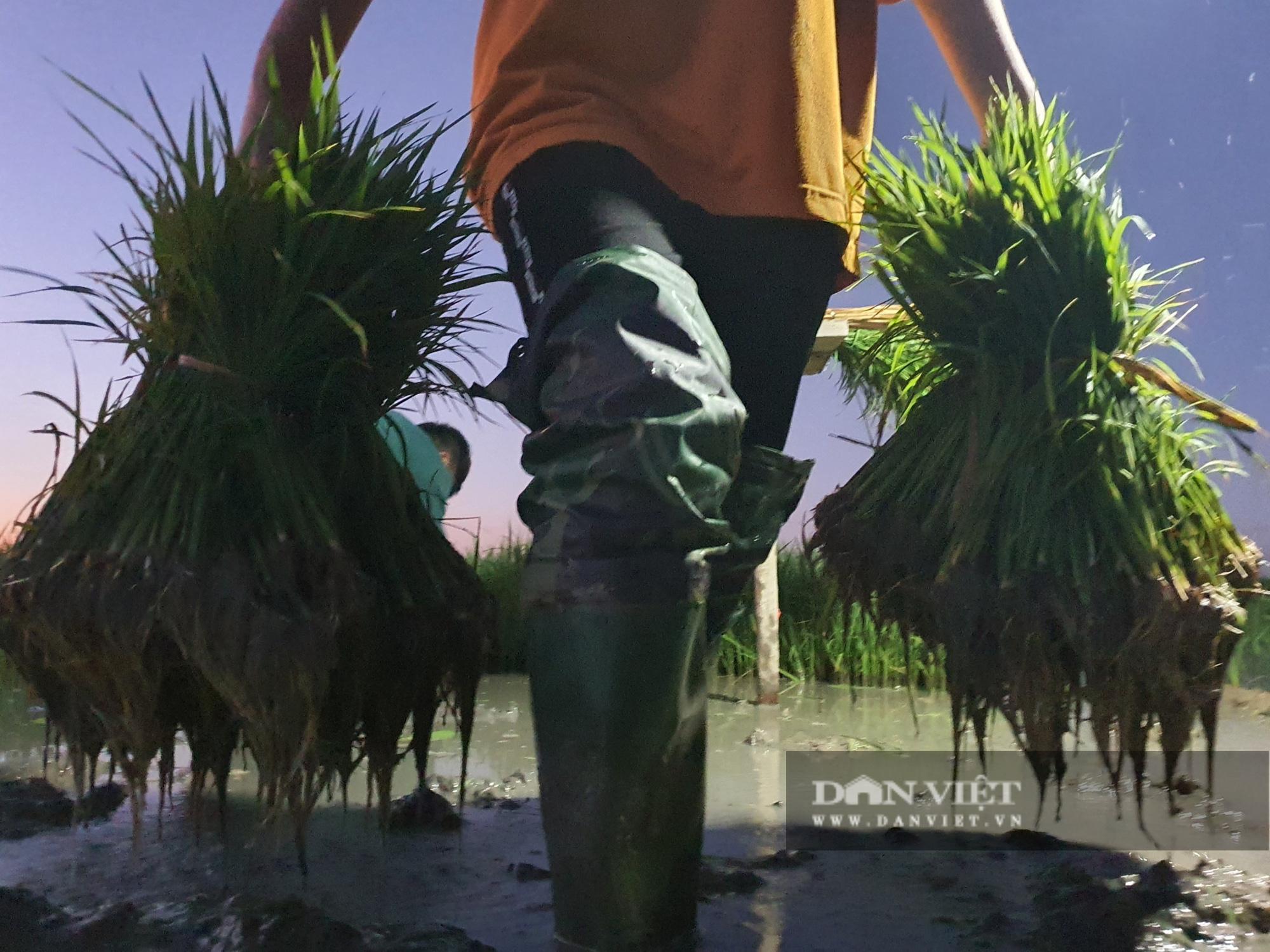 Thanh Hoá: Nắng nóng 40C nông dân Thanh Hóa chong đèn đi cấy lúa đêm  - Ảnh 8.