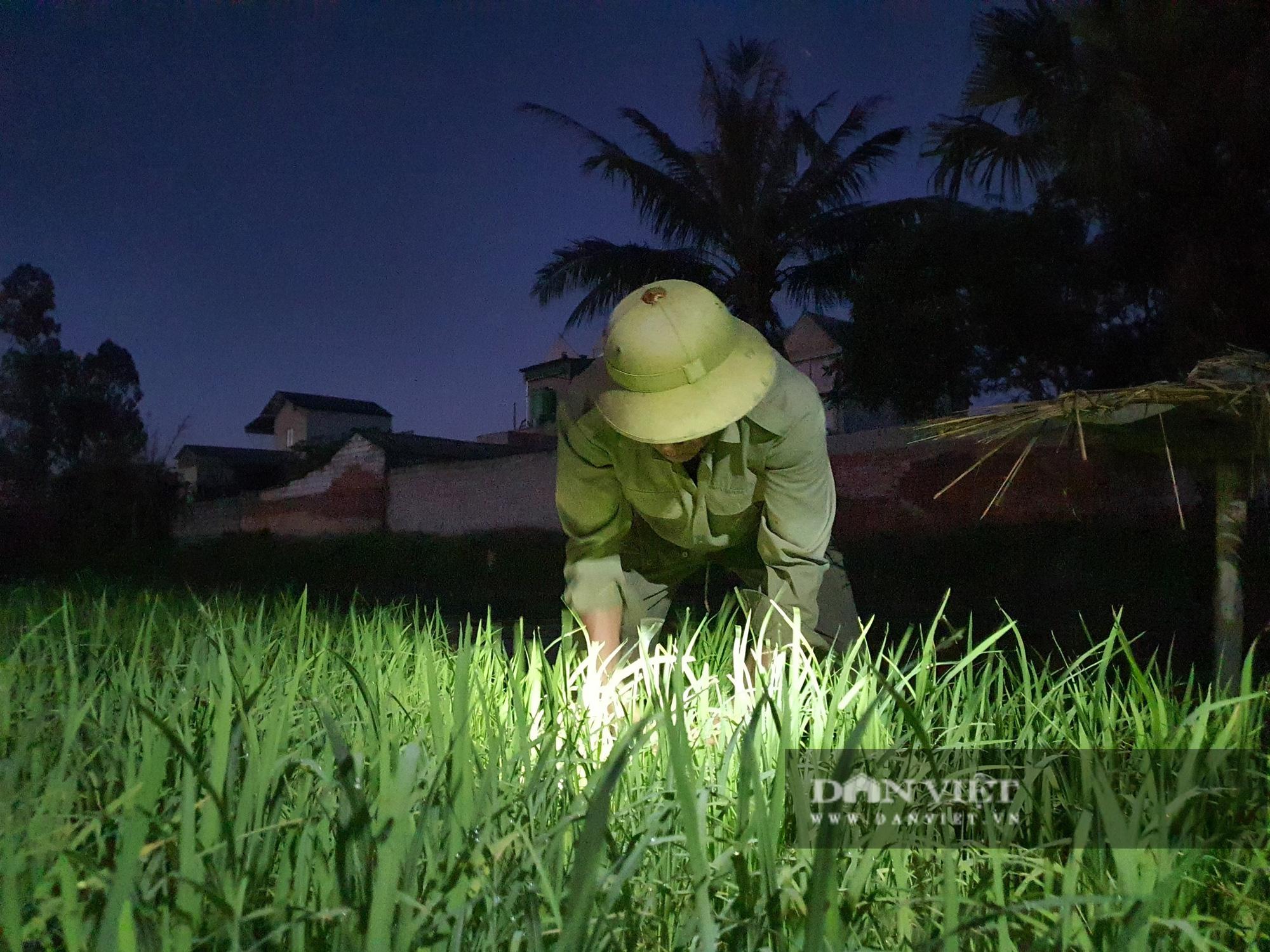 Thanh Hoá: Nắng nóng 40C nông dân Thanh Hóa chong đèn đi cấy lúa đêm  - Ảnh 9.