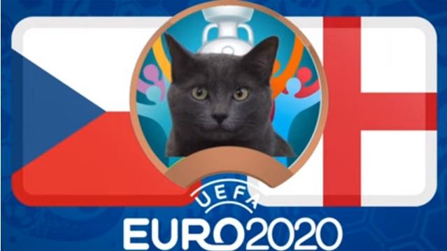 Mèo tiên tri Cass dự đoán kết quả Anh vs CH Czech: Bất ngờ! - Ảnh 2.