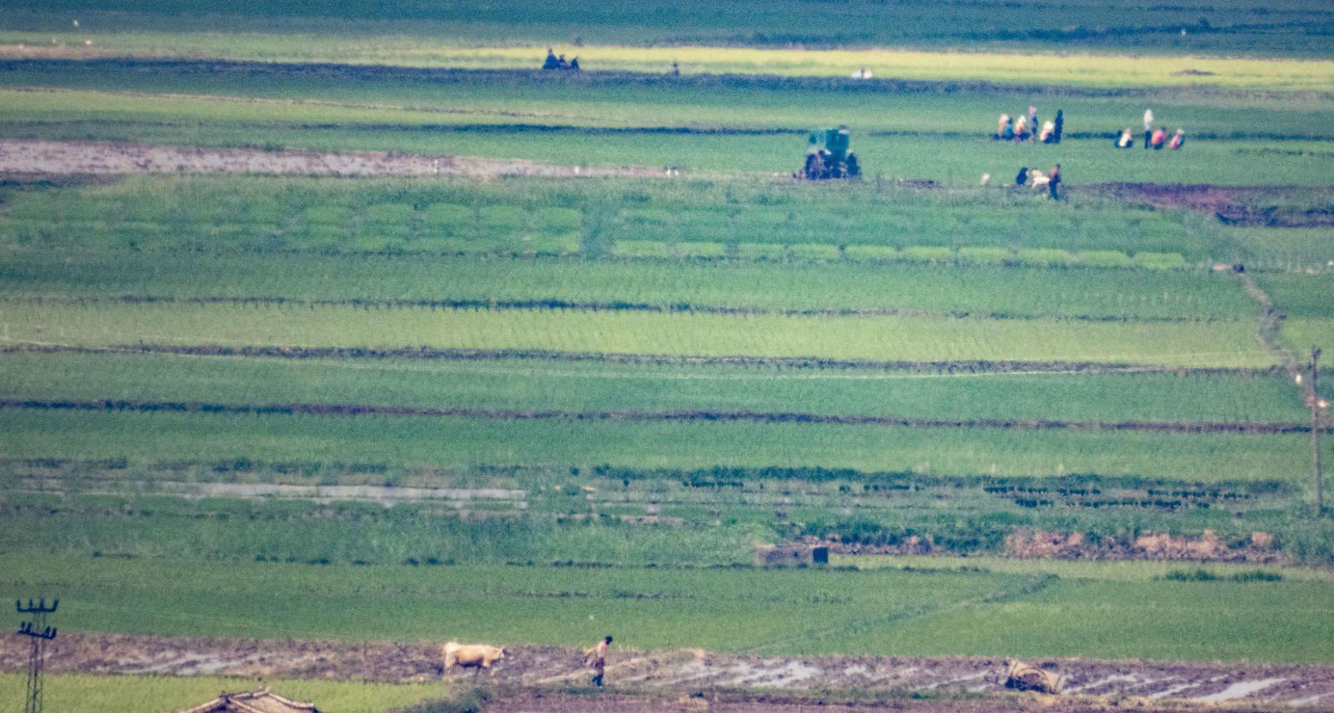 Ảnh hiếm về nông thôn Triều Tiên khi tình hình lương thực căng thẳng - Ảnh 5.