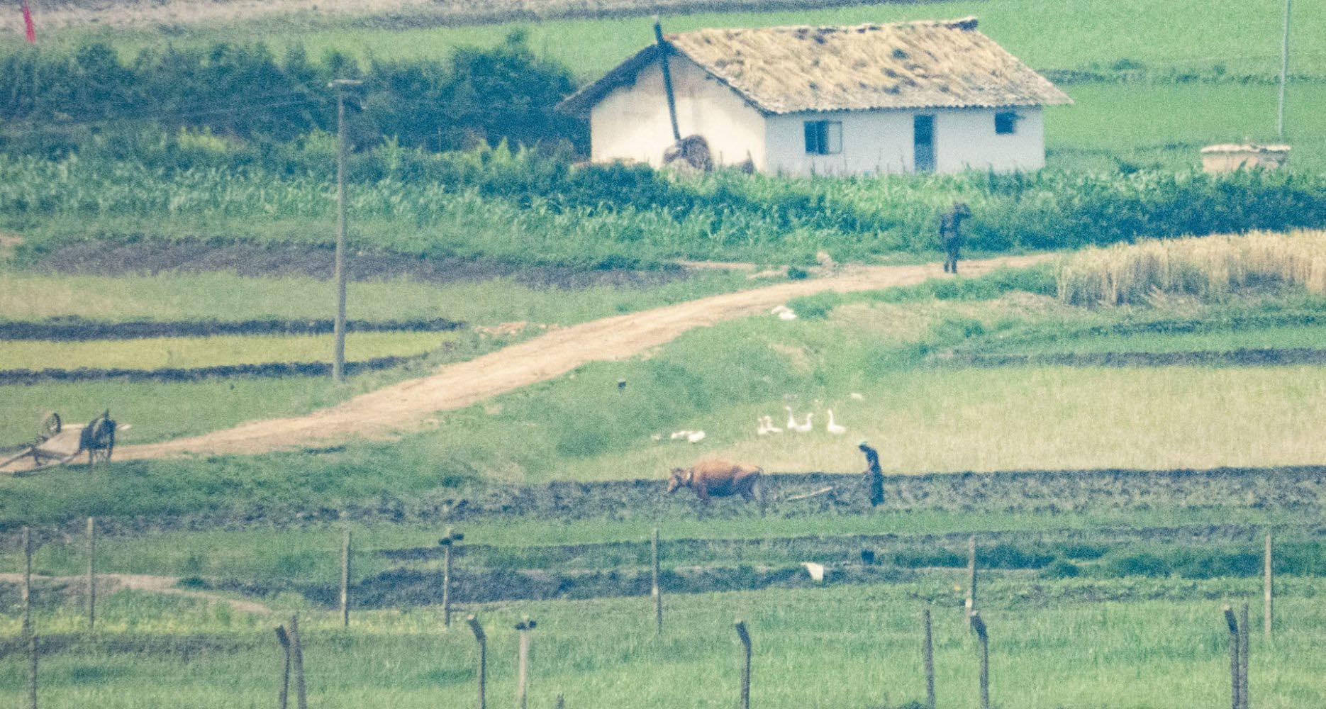 Ảnh hiếm về nông thôn Triều Tiên khi tình hình lương thực căng thẳng - Ảnh 9.
