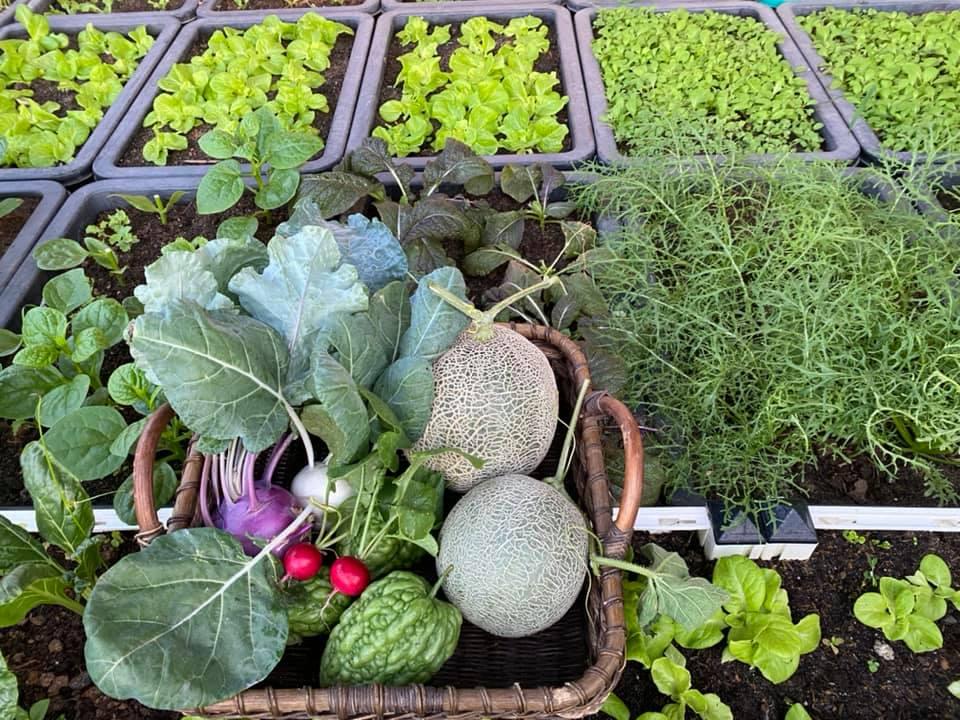 Từng không biết gì về trồng trọt, Vườn sân thượng trĩu quả  rác thải làm phân - Ảnh 5.