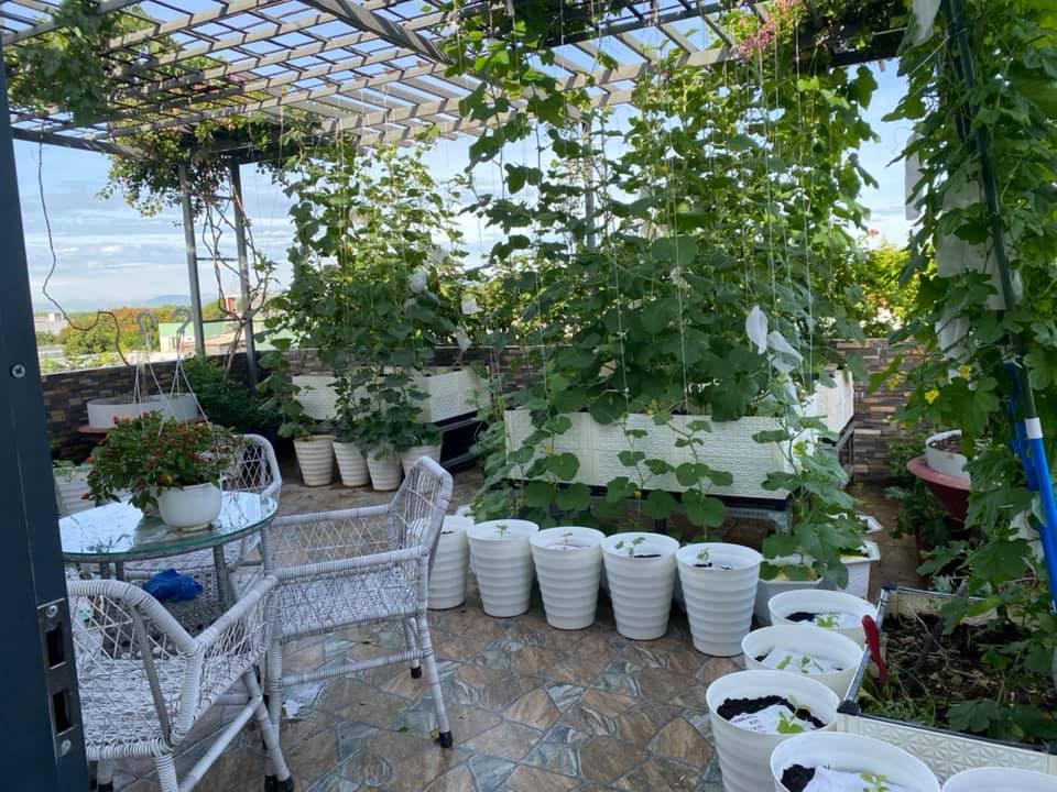 Từng không biết gì về trồng trọt, Vườn sân thượng trĩu quả  rác thải làm phân - Ảnh 7.
