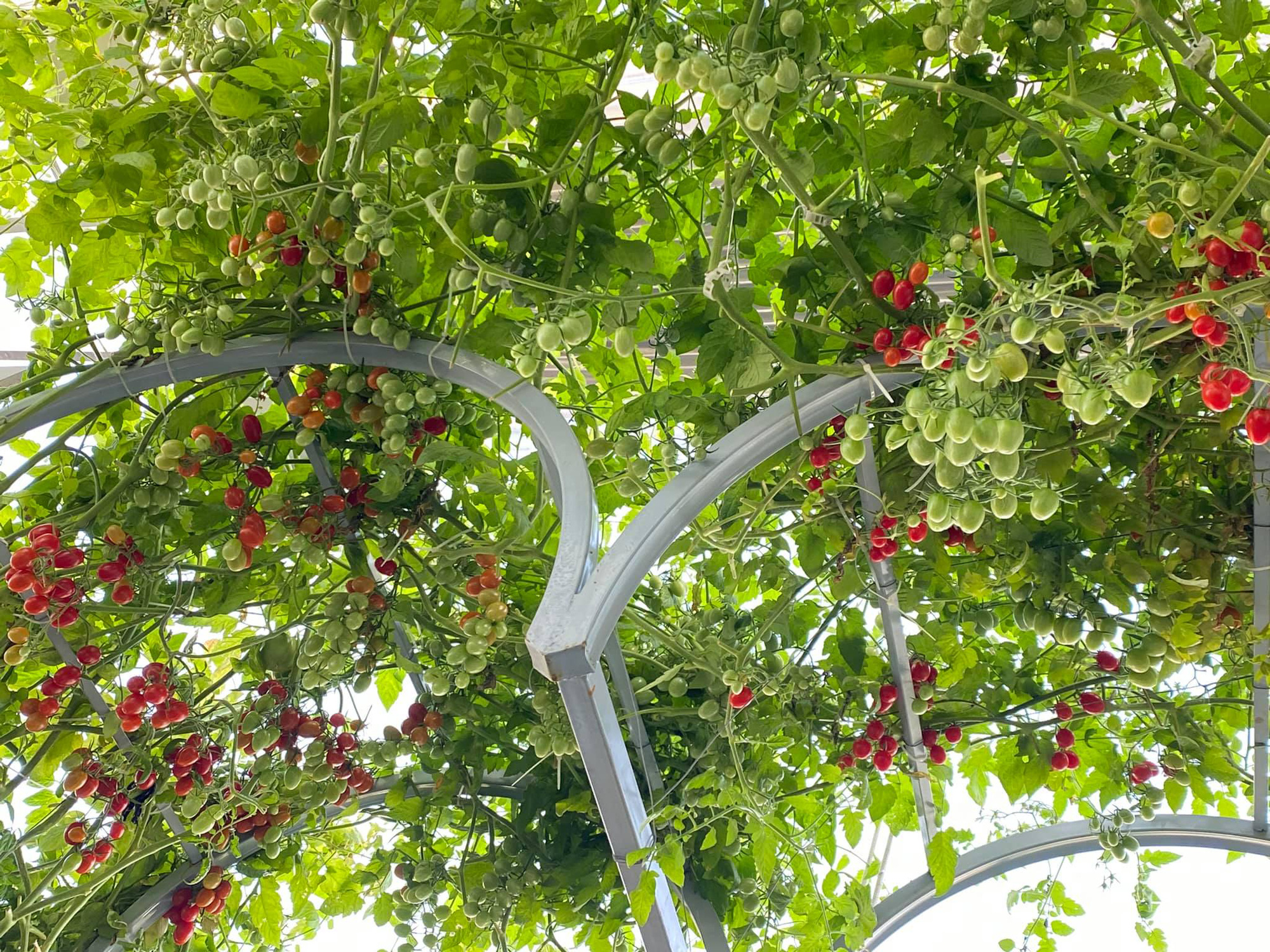 Từng không biết gì về trồng trọt, Vườn sân thượng trĩu quả  rác thải làm phân - Ảnh 8.