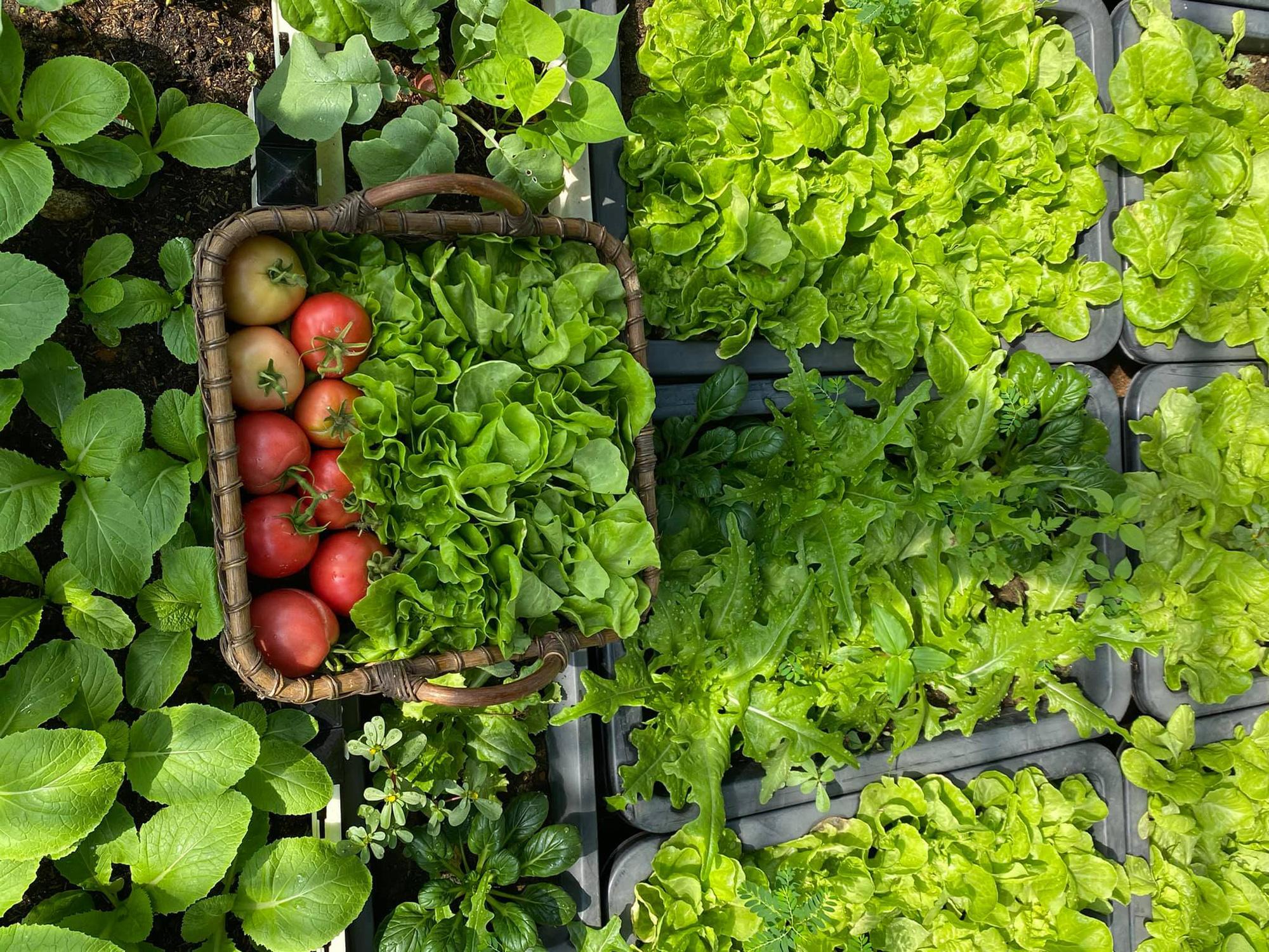 Từng không biết gì về trồng trọt, Vườn sân thượng trĩu quả  rác thải làm phân - Ảnh 2.