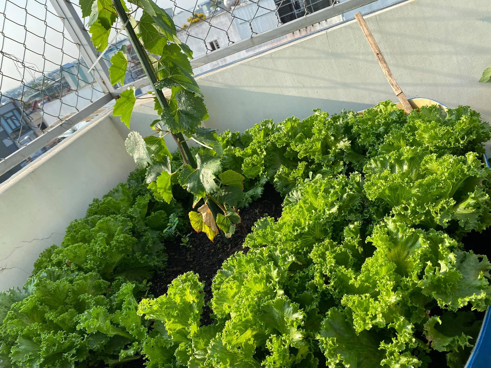 Từng không biết gì về trồng trọt, Vườn sân thượng trĩu quả  rác thải làm phân - Ảnh 3.
