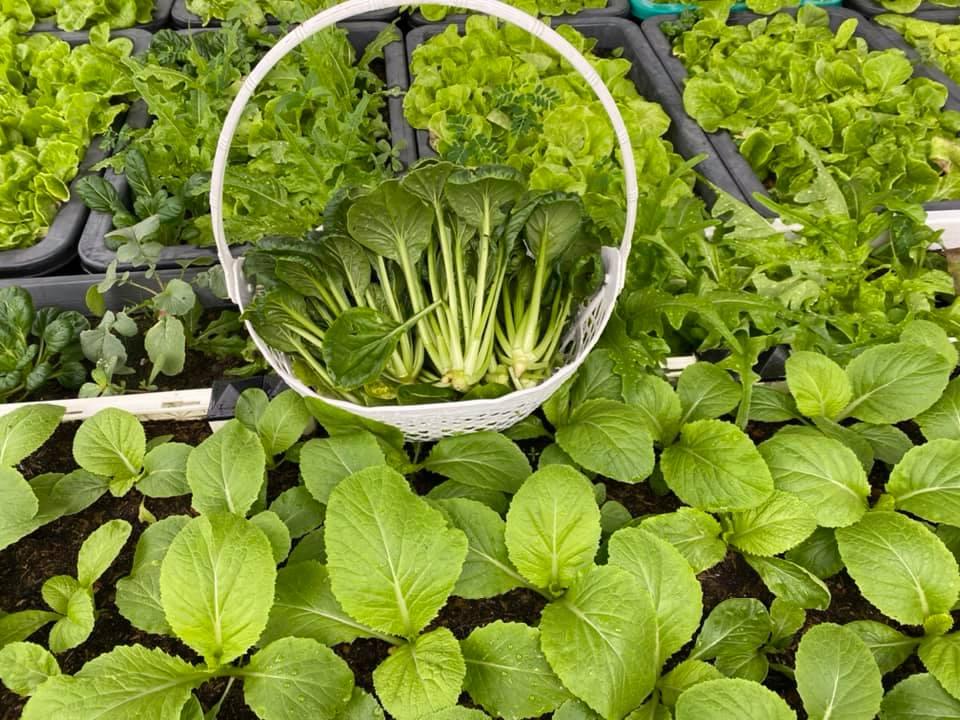 Từng không biết gì về trồng trọt, Vườn sân thượng trĩu quả  rác thải làm phân - Ảnh 4.