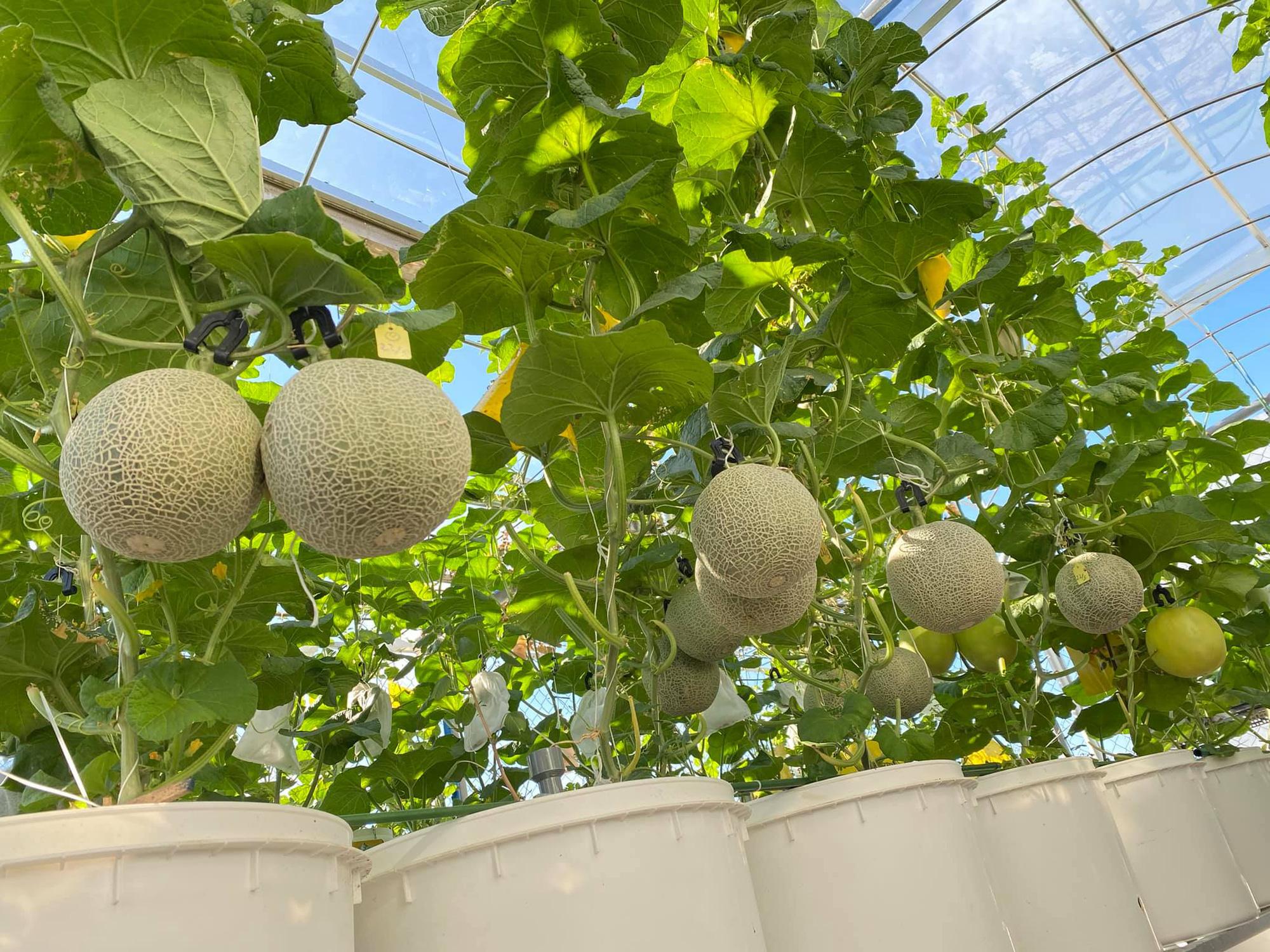 Từng không biết gì về trồng trọt, Vườn sân thượng trĩu quả  rác thải làm phân - Ảnh 9.