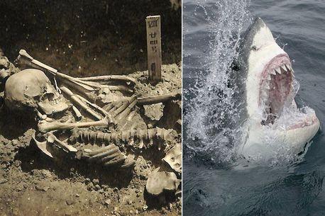 Phát hiện bất ngờ về người đàn ông bị cá mập cắn đứt lìa bàn tay cách đây 3.000 năm - Ảnh 1.