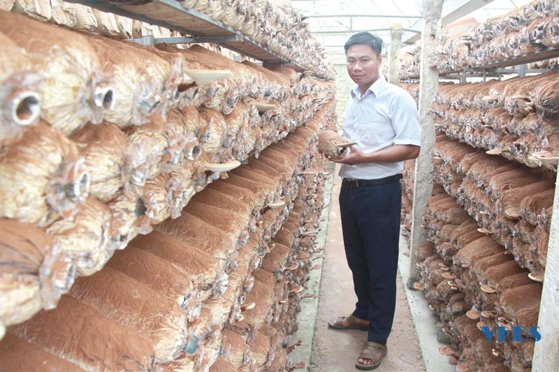Anh thanh niên Thanh Hóa 36 tuổi đã có 3 sản phẩm OCOP trong tay từ cây nấm, doanh thu tiền tỷ mỗi năm - Ảnh 1.
