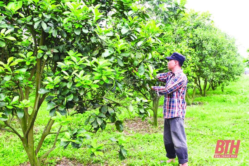 Một ông nông dân Thanh Hóa trồng lung tung đủ thứ cây theo kiểu chẳng giống ai, thu nhập mỗi năm hơn 2 tỷ đồng - Ảnh 1.