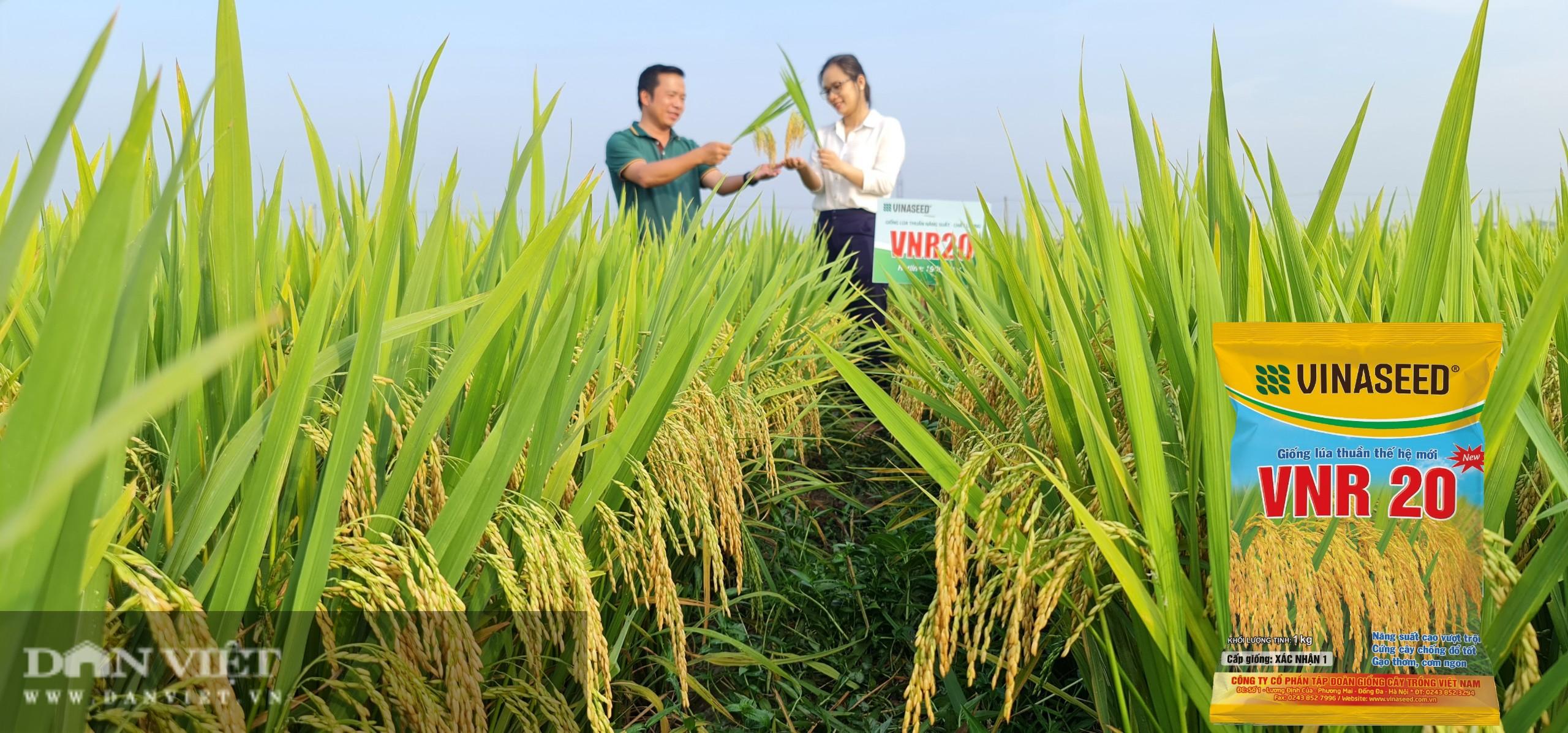 Giống lúa của Vinaseed ghi dấu ấn trên đất xứ Mường như thế nào? - Ảnh 3.