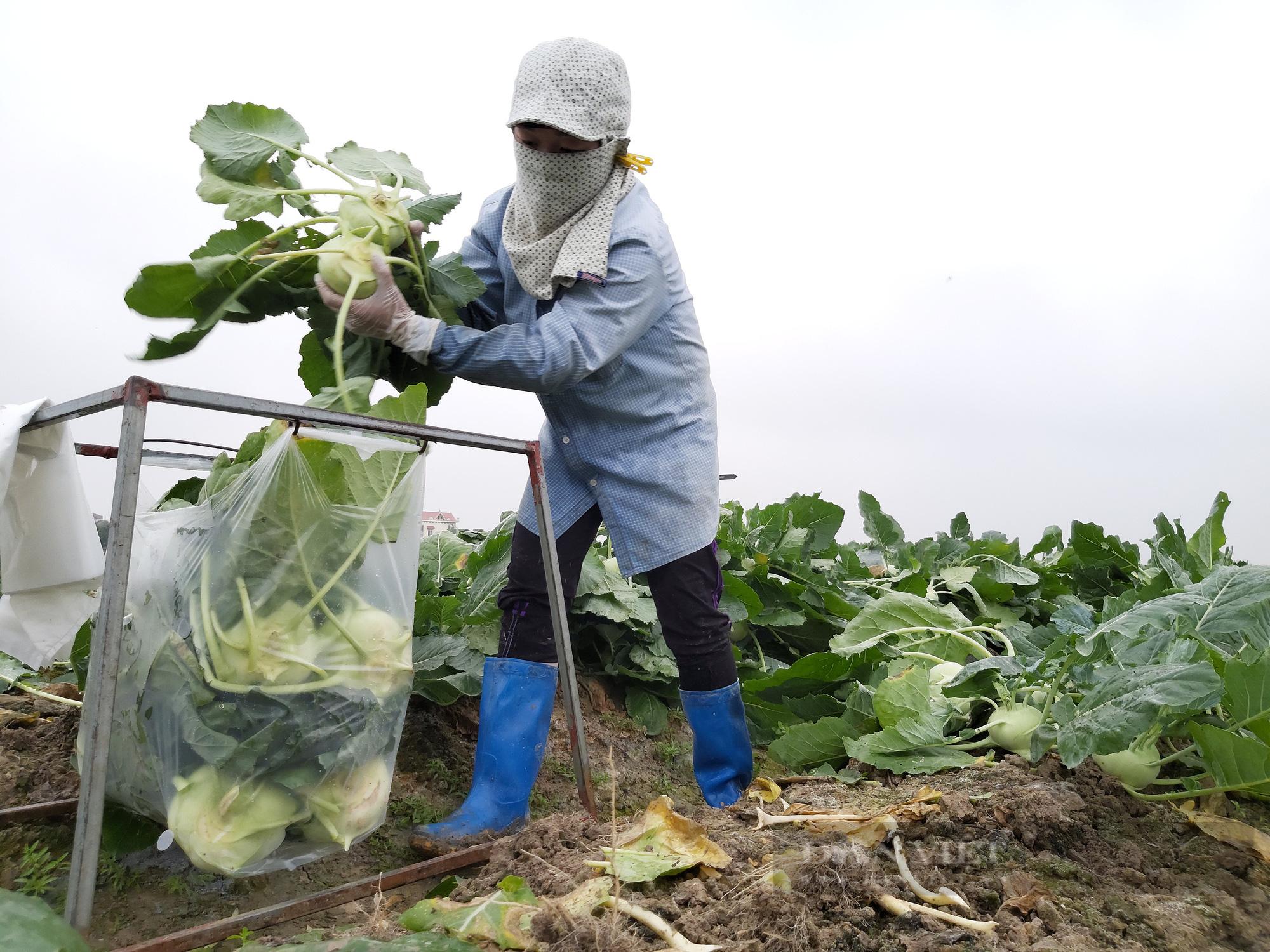 Sau chuyển đổi đất lúa ở Hải Dương: Nông dân thu nhập  hàng trăm triệu đồng/ha - Ảnh 1.