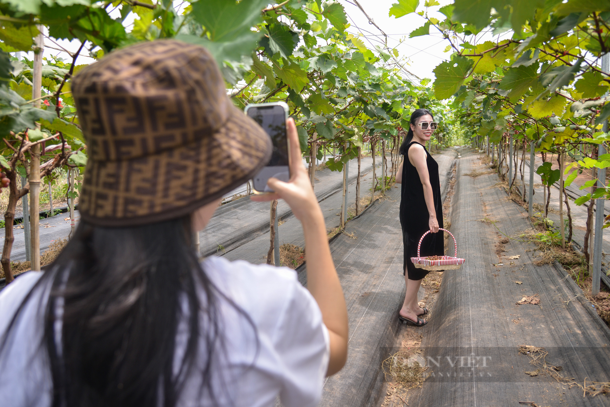 Nông trại nho giữa lòng Hà Nội thu hút giới trẻ tham quan, trải nghiệm - Ảnh 10.