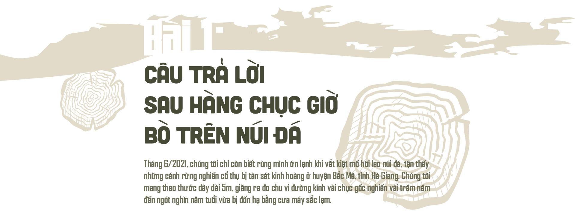 """Phía sau vụ """"thảm sát"""" rừng nghiến cổ thụ khủng nhất Việt Nam! - Ảnh 2."""