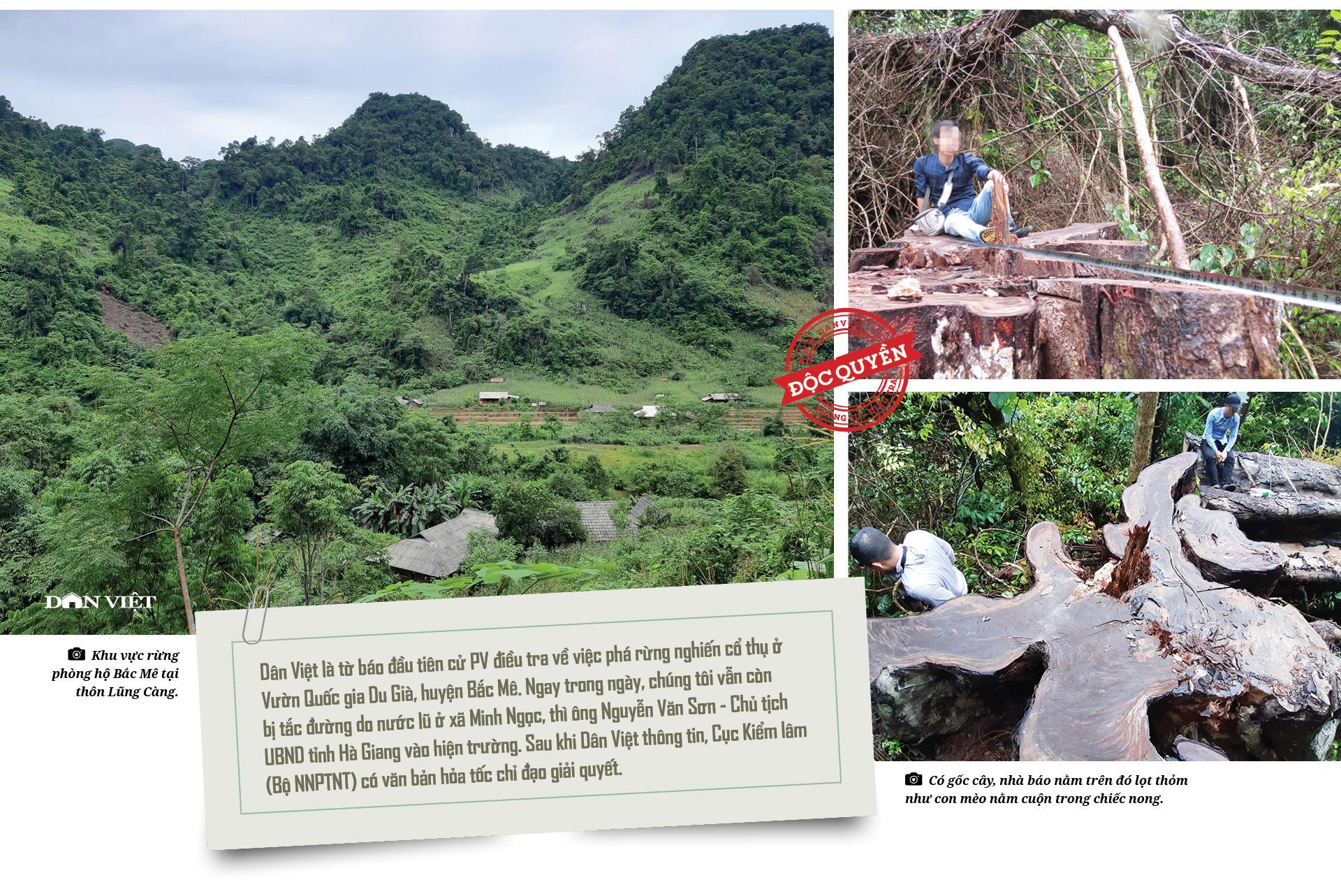 """Phía sau vụ """"thảm sát"""" rừng nghiến cổ thụ khủng nhất Việt Nam! - Ảnh 4."""