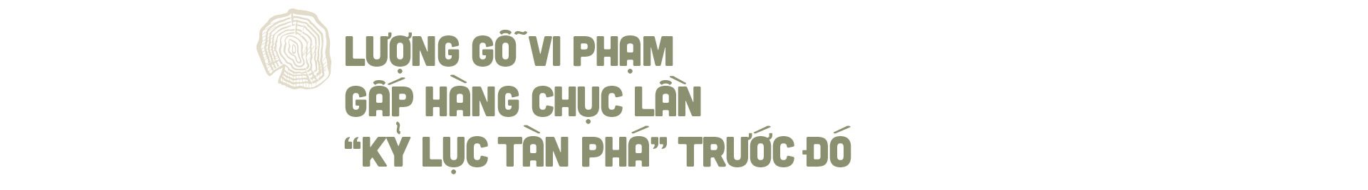 """Phía sau vụ """"thảm sát"""" rừng nghiến cổ thụ khủng nhất Việt Nam! - Ảnh 7."""