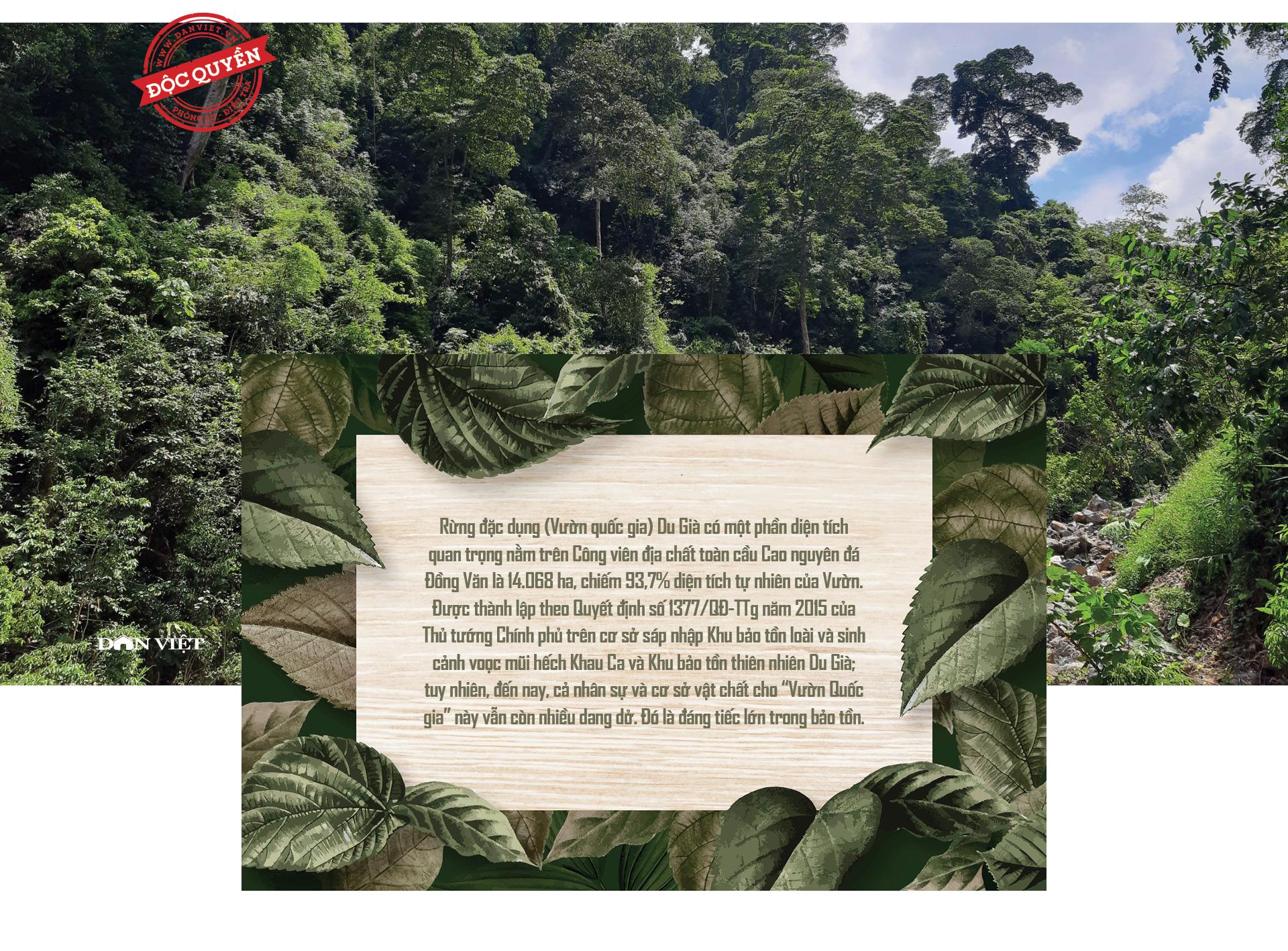 """Phía sau vụ """"thảm sát"""" rừng nghiến cổ thụ khủng nhất Việt Nam! - Ảnh 9."""