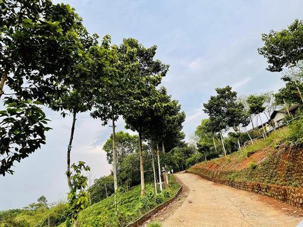 """Felicia City Bình Phước: Pháp lý hoàn thiện gắn với tiêu chuẩn """"sống xanh"""" - Ảnh 4."""