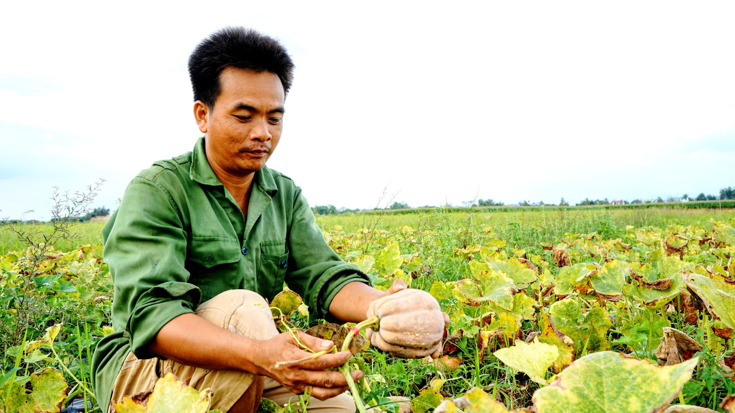 """Đồng Nai: Trồng """"nhà vô địch dinh dưỡng"""" chỉ lấy hạt, nông dân vùng miền núi nghèo khó này khấm khá - Ảnh 1."""