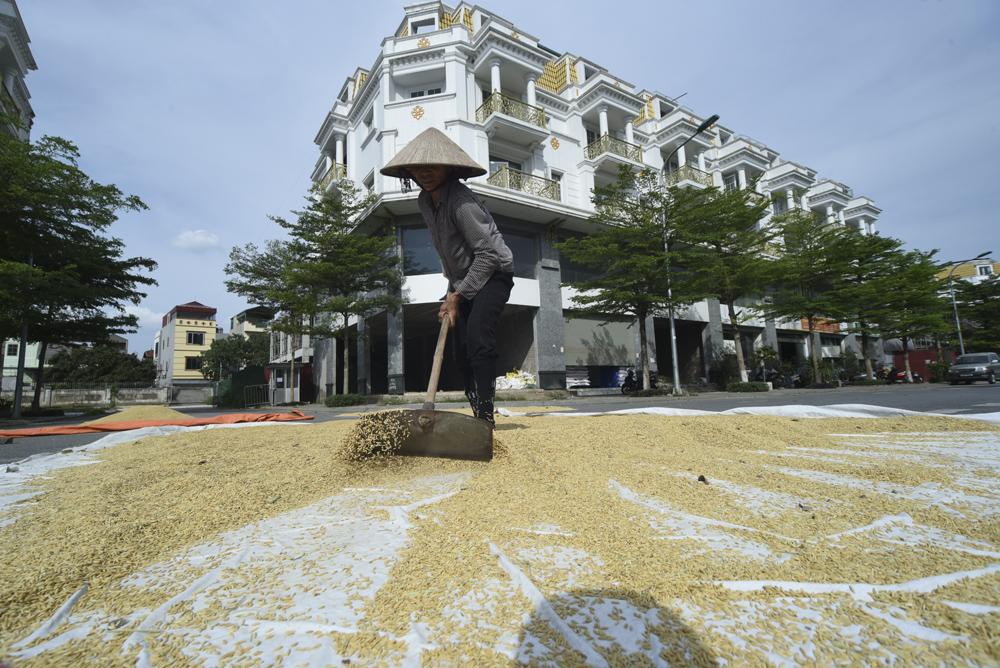 """Nông dân Hà Nội chơi sang: Phơi thóc ở """"khu nhà giàu"""" với những ngôi shophouse tiền tỷ - Ảnh 8."""