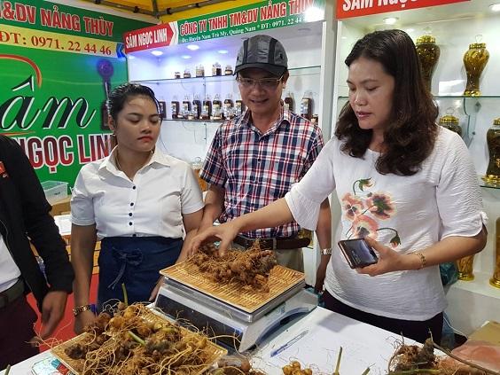 Quảng Nam: Đưa cây sâm hàng đầu Việt Nam giúp người dân mỗi năm thu nhập 3.000 - 4.000 USD - Ảnh 9.
