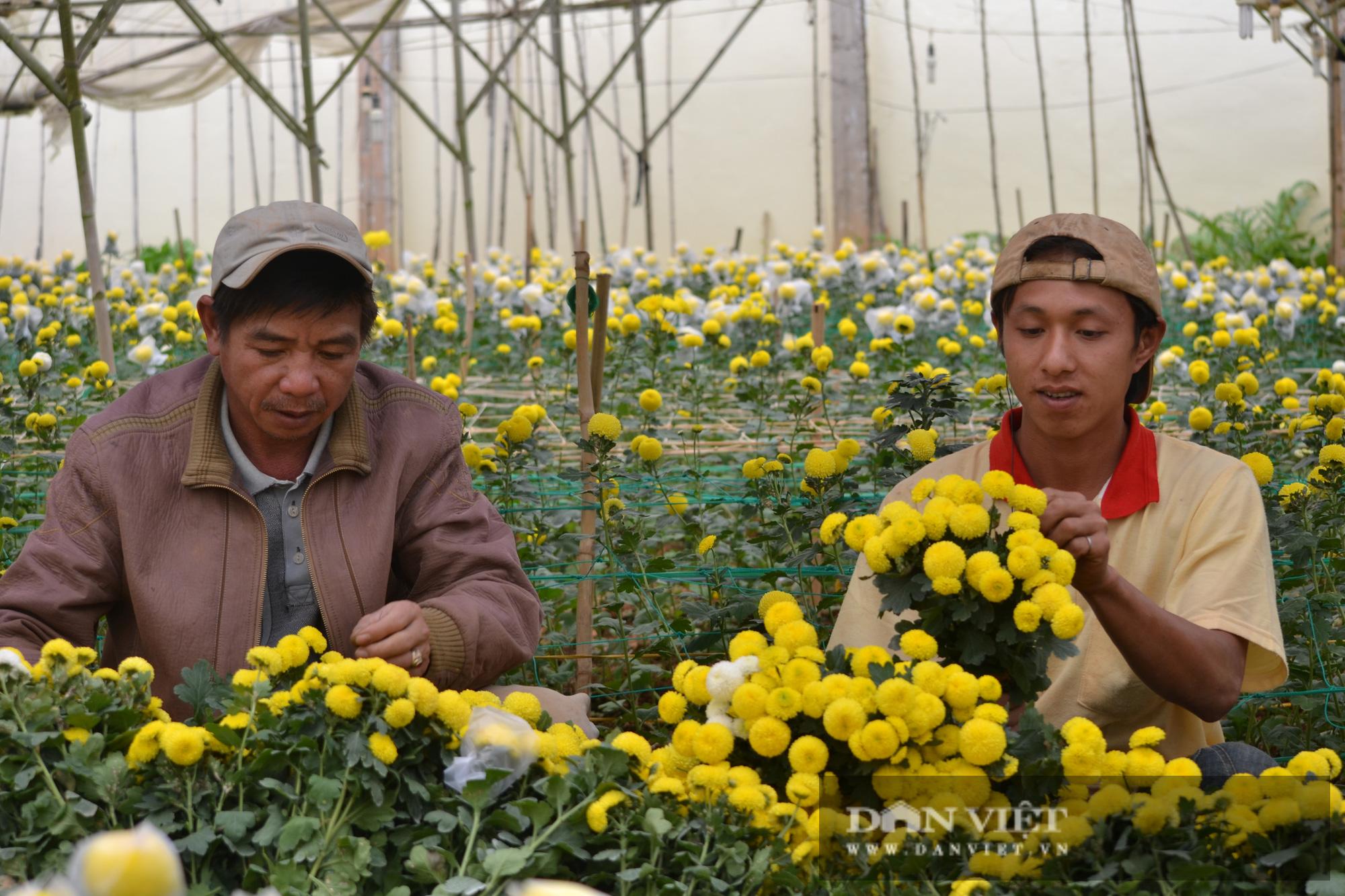 Lâm Đồng mong muốn TP.Hồ Chí Minh mở cửa chợ Đầm Sen để giúp tiêu thụ hoa Đà Lạt  - Ảnh 1.